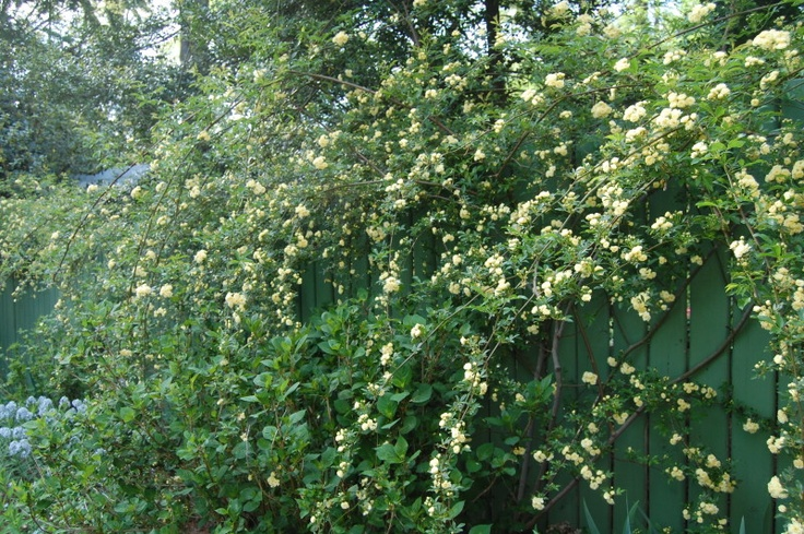 7 best Historic Garden Week in Virginia images on Pinterest ...