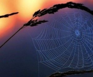 7 remèdes anti araignée 100% naturels