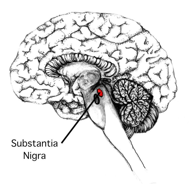 the 25  best substantia nigra ideas on pinterest