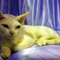 #dogalize Gatti senza pelo: la nascita delle nuove razze #dogs #cats #pets