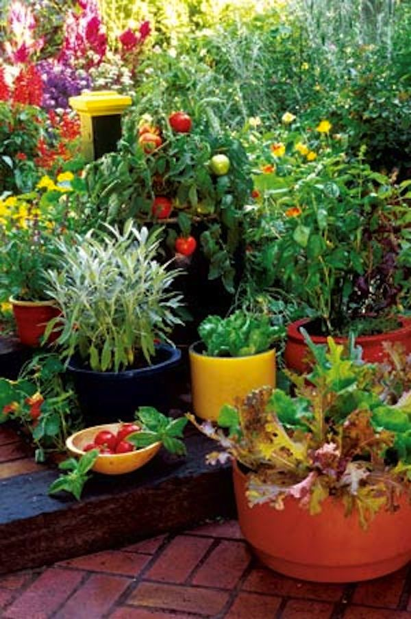Grow Your Own Container Gardens. You don't have to have land to have a garden full of healthy food. Container gardens can exist in just about any spot that gets good sun, such as a patio, deck or balcony. In fact, some say that a container garden is easier to maintain than a conventional garden. Containers, both traditional and self-watering, allow you to grow just about anything you would normally grow in the ground on a patio, deck or balcony.