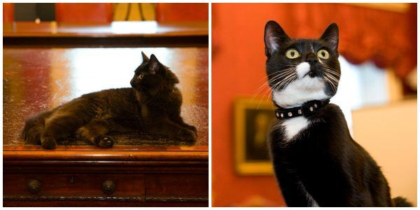 Mews and Nips: Meet Evie and Ossie, the UK Cabinet Office's Newest Staff Members  #cats