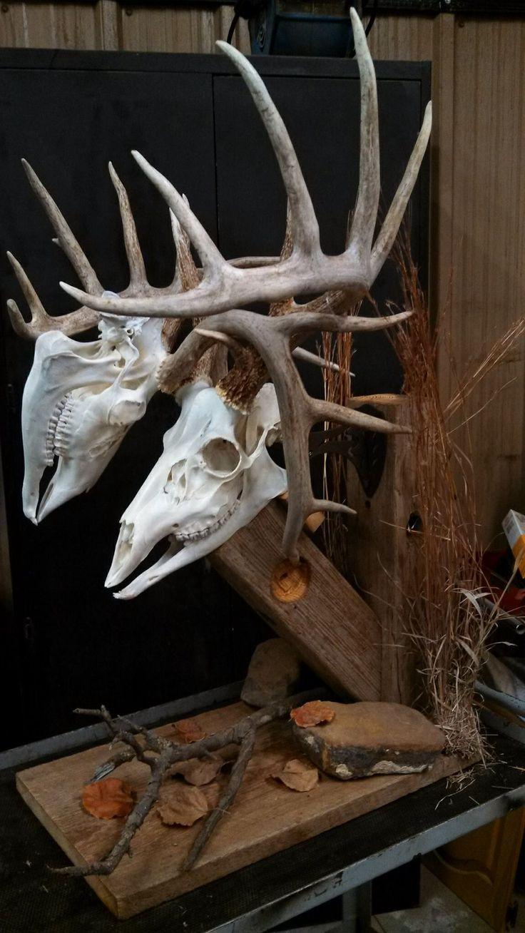 Whitetail. Whitetail mounts. Pinterest Horns