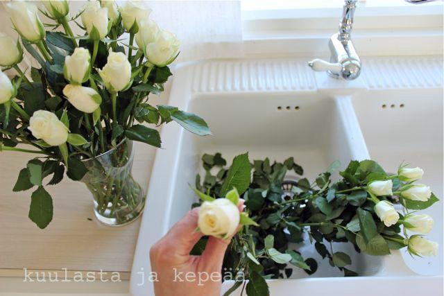 Valkeita ruusuja.