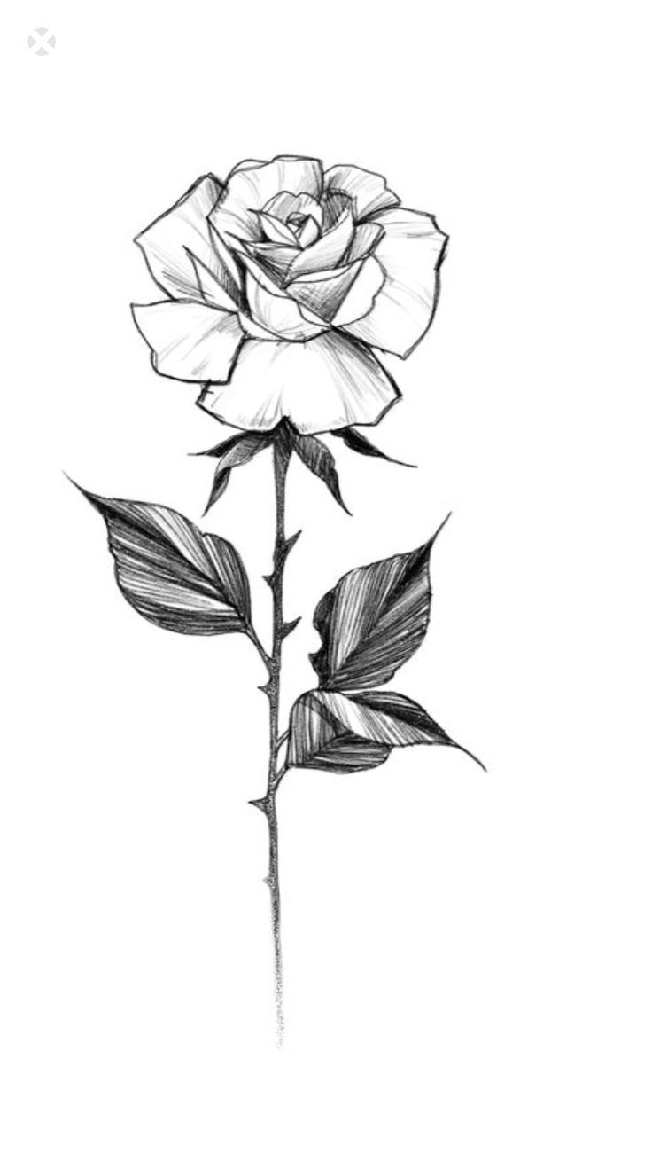Untitled Rose Drawing Tattoo Single Rose Tattoos Roses Drawing