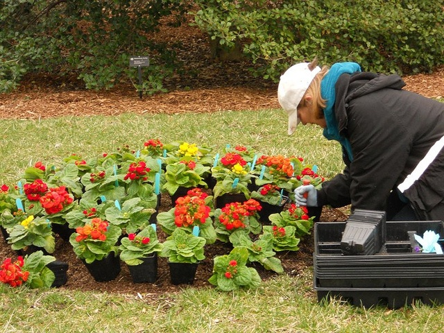 High Quality When Buying Bedding Plants, Choose Compact, Bushy Plants That Have Not  Begun To Flower