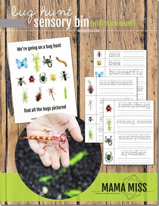 sensory: Bug Hunt Sensory Bin