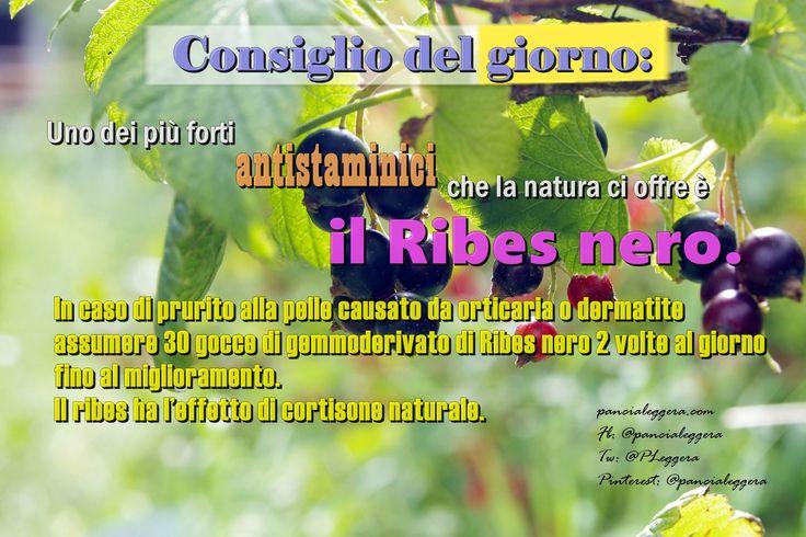 #ConsiglioDelGiorno - pillole del #benessere Orticaria e dermatite - rimedi naturali.