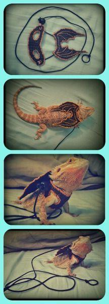 lizard harness | Tumblr