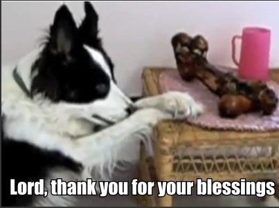 Faith.com - These Dogs Say Grace Before Every Meal!