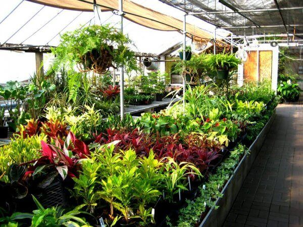 How To Transplant Nursery Plants Into Your Garden With Images