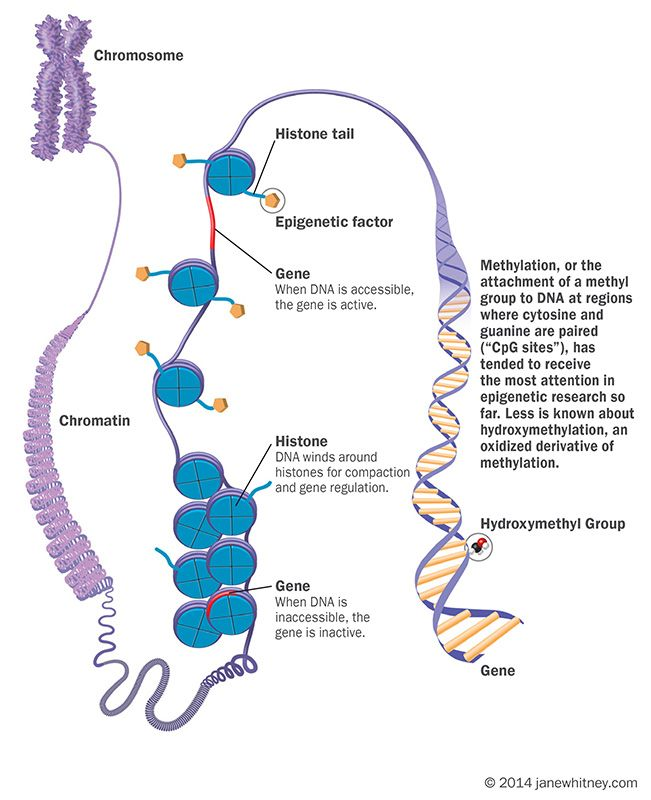 Positive Effects Of Gene Altering Essay Research