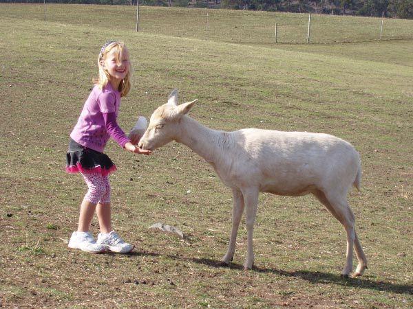 Charli at ZooDoo near Richmond. Article and photo for Think Tasmania.