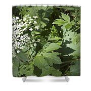 Cow Parsnip Shadow Shower Curtain by Sandra Foster