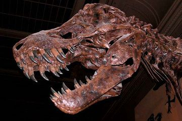 Tyrannosaurus Rex: Facts about T. Rex, King of the Dinosaurs