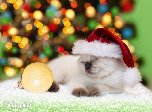 #Święta bezpieczne dla kota