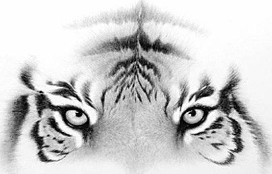 Bengal Eyes...pen & ink drawing