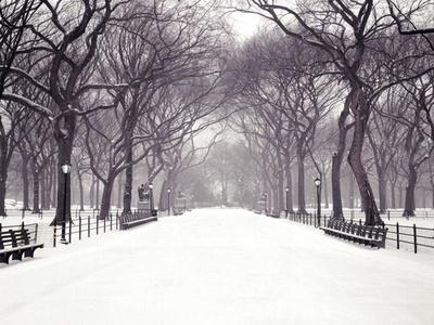 Poet's Walk: my favorite spot in Central Park.