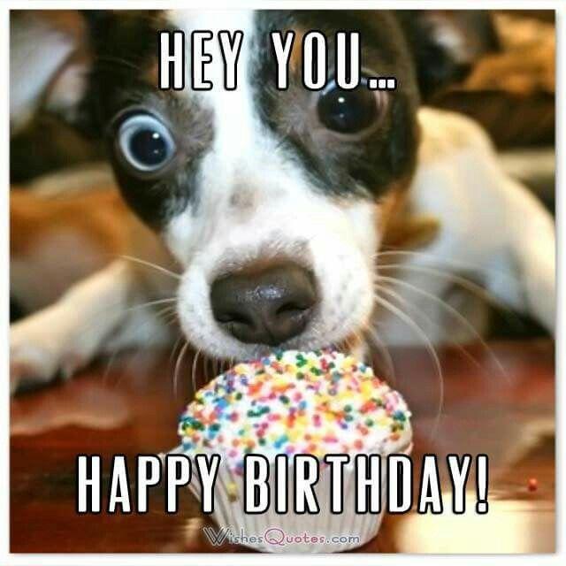 Best 25+ Funny Birthday Wishes Ideas On Pinterest