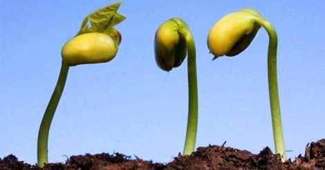 Cómo+hacer+germinar+las+semillas+3+veces+más+rápido