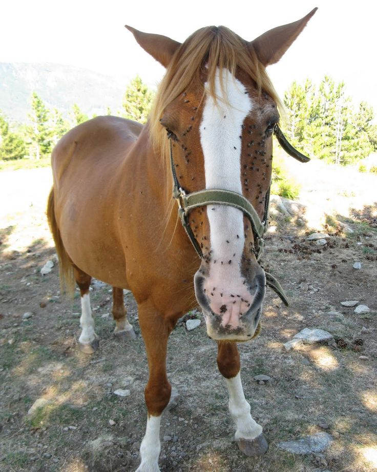 Making Natural Fly Spray For Horses