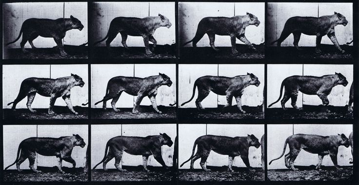 essay on eadweard muybridge Flying horse captures the story of eadweard muybridge, the photographer who was considered one of the true fathers of the moving image in 1872, muybridge was living the life as a successful .