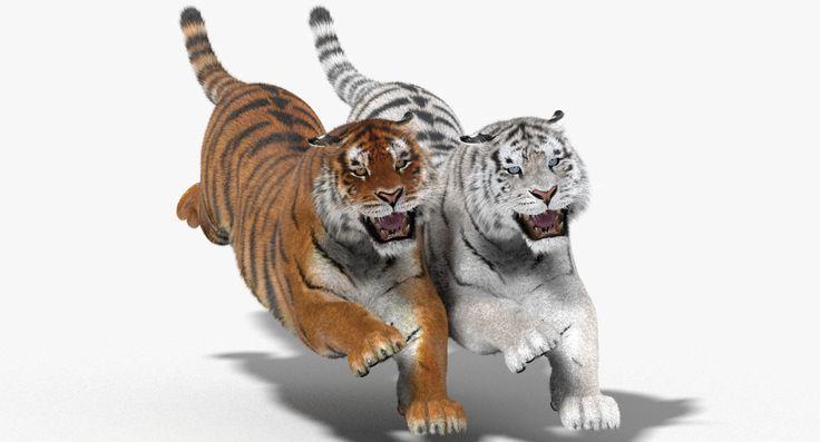 3D Tiger Fur Color Hair Animation - 3D Model