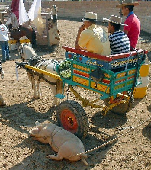 URBATORIVM: LA COLORIDA TRADICIÓN DE LA PINTURA DE LOS CARRETONES POPULARES CHILENOS