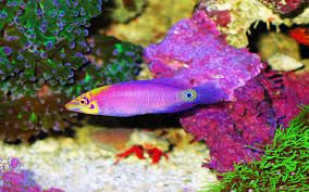 Image result for fishes