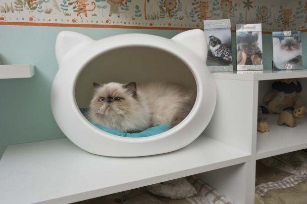 dormitorios para gatos - Pesquisa Google