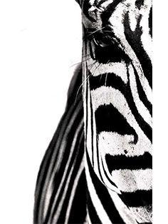 #veronikamaine #blackandwhite #inspiration #summer13 #zebra