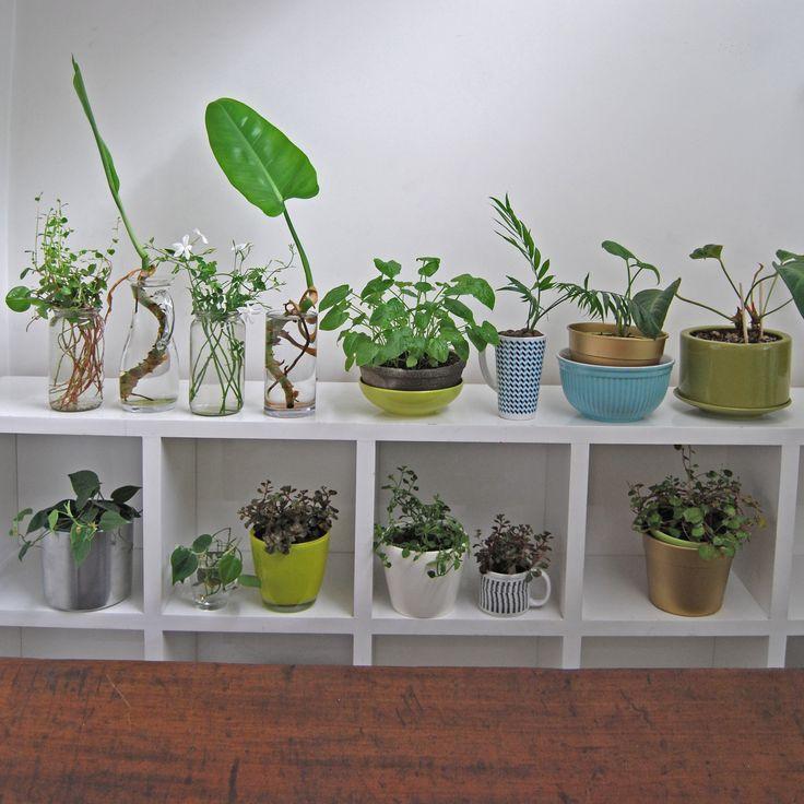 VerdeMaceta.com  Plantas para decoración de interiores
