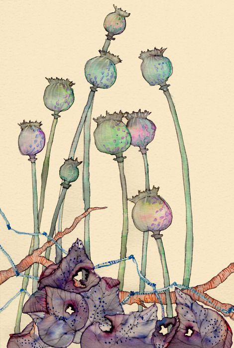 Colleen Parker - Wildlife in Inks & Watercolours | Poppy seed pods