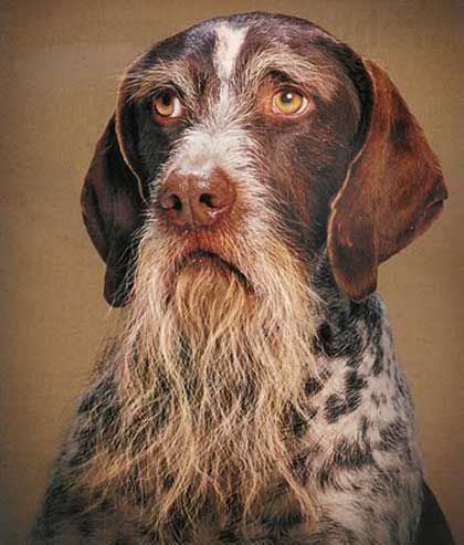 Haha... Looks like this dog should be owned by one of the Duck Dynasty guys!