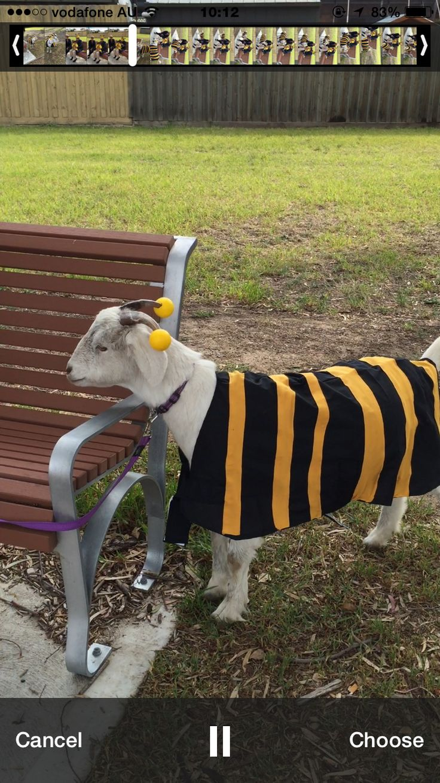 Bee-goat/goat-bee