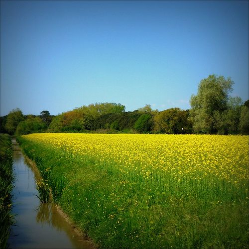Blue+yellow=green by angelicchiatrullall (yeppa!), via Flickr