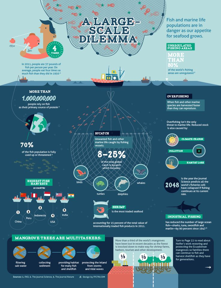 Overfishing infographic for Heifer | Infographics for a ...