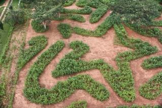 Honeydew A-maize-ing Mazes