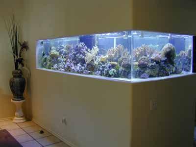 500 Gallon Coral Reef Tank Aquarium Design Marine