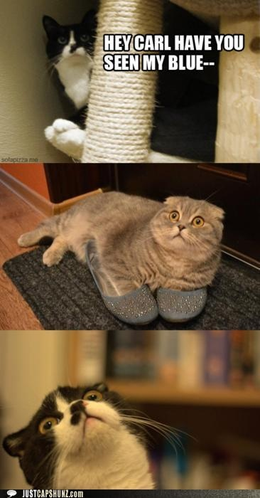 You!!: Funny Things, Cat, The Faces, Giggles, Funny Stuff, Blue Shoes, Hey Carl, Funny Animal, Smile