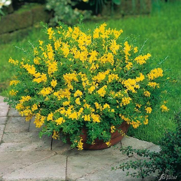 Blumen garten  Die besten 25+ Blumengarten Ideen auf Pinterest | Blumen anbauen ...