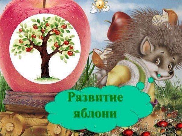 Как развивается яблоня ? - Поделки с детьми | Деткиподелки