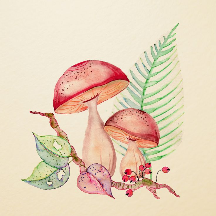 Mushrooms | by Colleen Parker