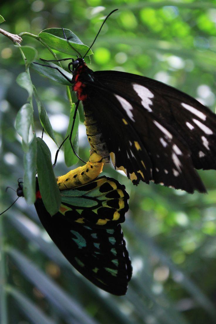 Mariposas on Behance