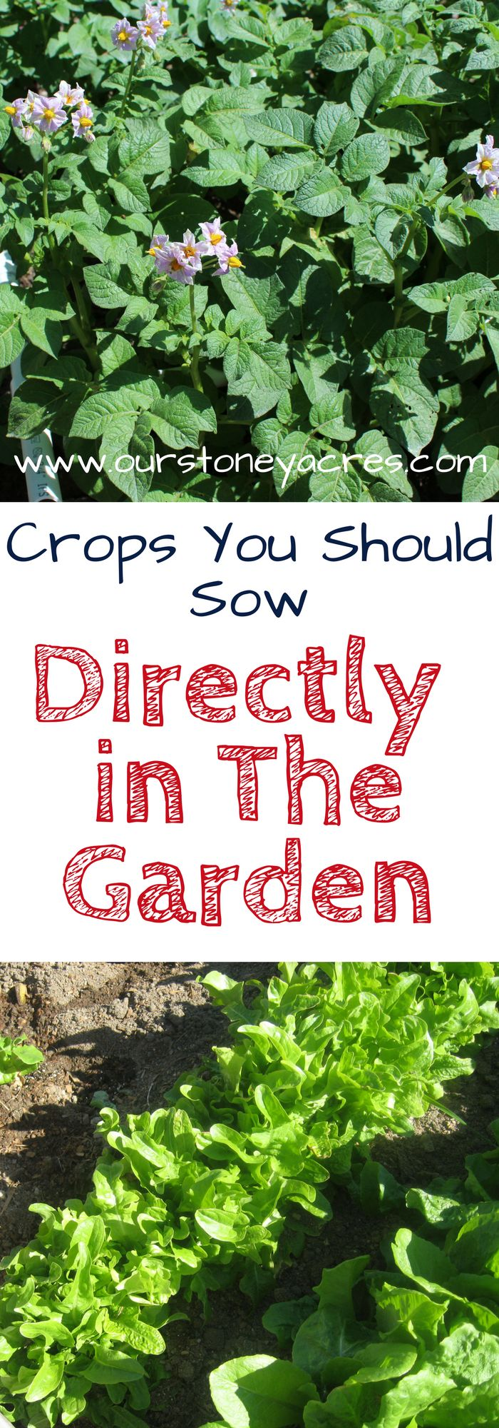 Crops you shouldn't bother starting indoors. There are some crops you shouldn't bother starting indoors. Instead they should be directly sown in the garden.