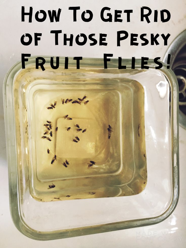How To Get Rid of Fruit Flies! Fruit flies were driving us crazy until I did this one simple trick... None we have none!