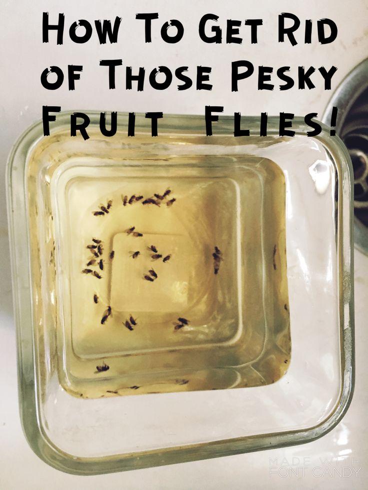 healthy fruit dip recipe cream cheese getting rid of fruit flies