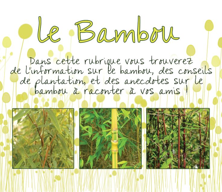 les bambous du bambou nain au bambou g ant p pini riste cr a 39 paysage bambou pinterest. Black Bedroom Furniture Sets. Home Design Ideas
