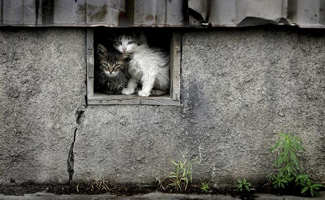 Tip 1 If You Are Trapping A Feral Cat With The Intention Of Short Term Care Be Sure To Select A Cat Trap That Features A Feral Cats Feral Cat Shelter Kittens