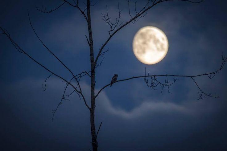 Owl is well... Photo by: Jani Ylikangas
